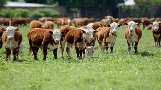 F. De Freitas: El remate 227 estuvo marcado por ''el mercado climático'' — Mercados — Dinámica Rural   El Espectador 810