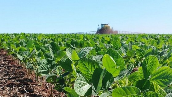 Cultivos de verano: ''La siembra está prácticamente paralizada'' — Agricultura — Dinámica Rural | El Espectador 810