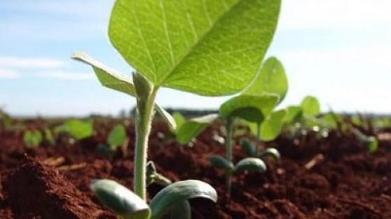 Soja: La falta de lluvias condiciona la siembra de primera — Agricultura — Dinámica Rural | El Espectador 810