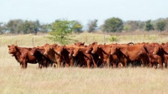 El clima incidió en el ajuste pronunciado de precios — Mercados — Dinámica Rural   El Espectador 810