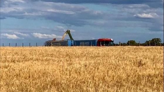 Los rindes en trigo son buenos, y con buen peso hectolítrico — Agricultura — Dinámica Rural | El Espectador 810