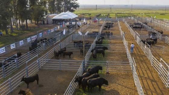 O. Fernández: ''La falta de lluvias es coyuntural, la ganadería demostró su fortaleza'' — Ganadería — Dinámica Rural | El Espectador 810