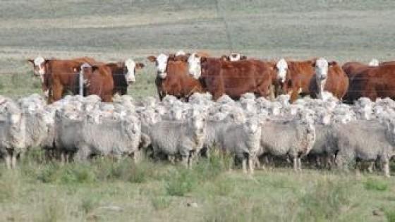 J. Riani: ''Tenemos metas realizables, una de ellas es exportar ganado en pie a Brasil'' — Ganadería — Dinámica Rural | El Espectador 810