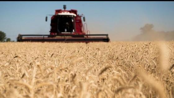 Argentina cosechó el 40% del área de trigo, con rindes por debajo del año pasado — Agricultura — Dinámica Rural | El Espectador 810