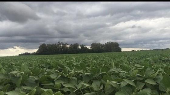Lluvias en Brasil impactan en precio de la soja — Mercados — Dinámica Rural   El Espectador 810