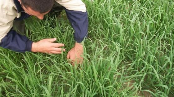 Prolesa promueve alternativas de siembra ''para un otoño desafiante'' — Lechería — Dinámica Rural | El Espectador 810