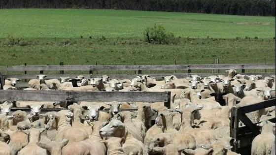 El MGAP habilitó exportación de ganado en pie a Brasil — Ganadería — Dinámica Rural | El Espectador 810