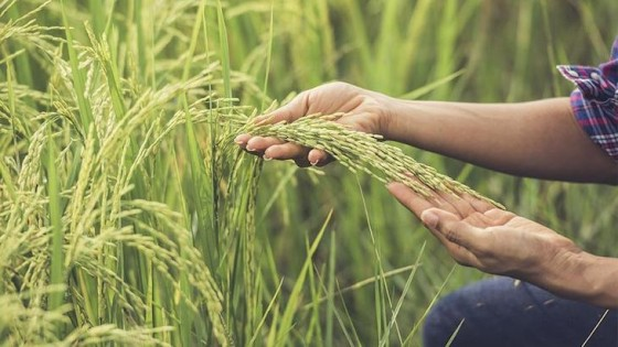 Brasil cumplió y Uruguay recuperó la competitividad — Economía — Dinámica Rural | El Espectador 810
