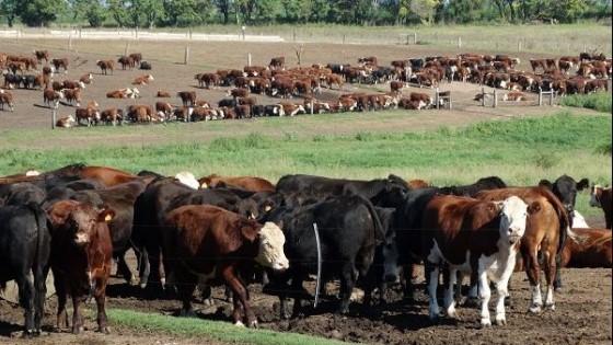 Poca oferta, demanda fluida y precios estables — Ganadería — Dinámica Rural | El Espectador 810