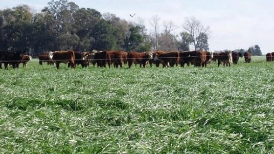 Ante el déficit hídrico, qué cosas hay que hacer para recomponer la base forrajera — Ganadería — Dinámica Rural | El Espectador 810