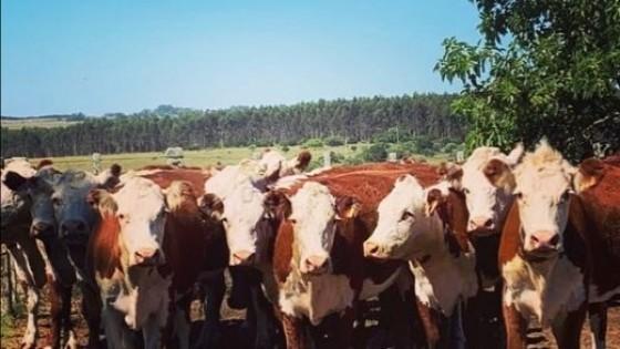 Pantalla Uruguay rematará en el entorno de los 5 mil vacunos — Mercados — Dinámica Rural | El Espectador 810