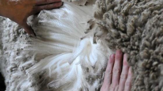 R. Stewart: ''Hay lana de dos zafras sin vender'' — Mercados — Dinámica Rural | El Espectador 810