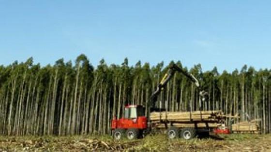 Federación Rural con varios temas en agenda, pero será prioridad el Forestal — gremiales — Dinámica Rural | El Espectador 810