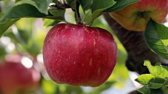 La manzana se valoriza, debido a una menor producción en la zafra — Granja — Dinámica Rural | El Espectador 810