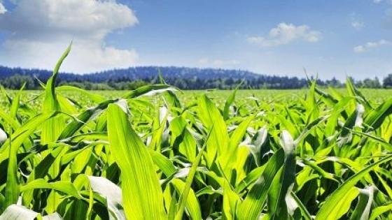 ''La Niña'' ingresaría en un escenario neutro — Clima — Dinámica Rural | El Espectador 810