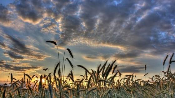 M. Bidegain: ''Es esperable que en marzo y abril llueva por debajo de lo normal'' — Clima — Dinámica Rural   El Espectador 810