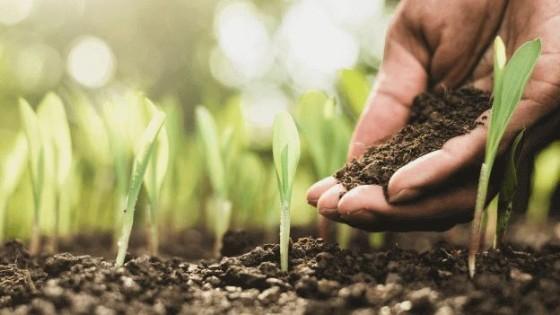 Prolesa promueve ''Plan Fertilizantes'' con beneficios especiales — Lechería — Dinámica Rural | El Espectador 810