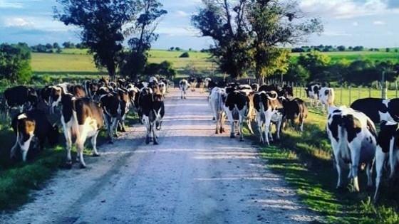 G. Berti: ''Quedan cosas por resolver, pero hay un mejor escenario para la lechería'' — Lechería — Dinámica Rural | El Espectador 810