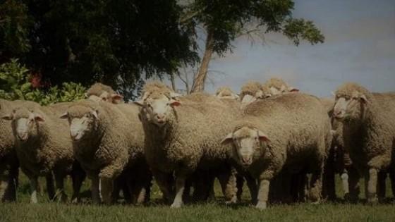 ''La Esperanza'' de Gambeta y Vieytes, es sinónimo de carne y lana — Ganadería — Dinámica Rural | El Espectador 810
