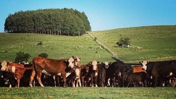 Pantalla Uruguay ''pone en el mercado'' más de 7 mil vacunos — Mercados — Dinámica Rural   El Espectador 810