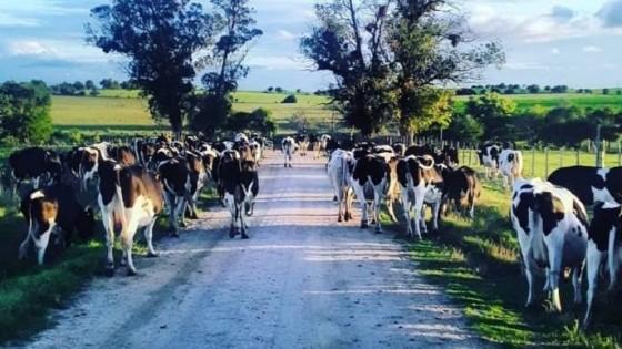 J. Zavala: ''Es importante terminar con las inequidades del FAL'' — Lechería — Dinámica Rural | El Espectador 810