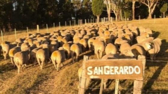 Escritorio Dutra vende  los Corriedale de ''San Gerardo'' — Ganadería — Dinámica Rural | El Espectador 810