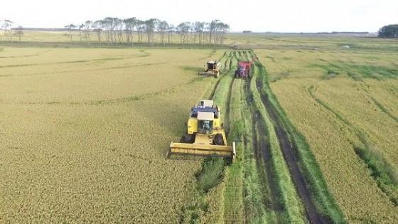 En un área cosechada superior al 10%, los rindes de arroz son similares a la zafra pasada — Agricultura — Dinámica Rural | El Espectador 810