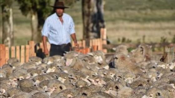 Bamidal va por más mercados para la carne ovina — Economía — Dinámica Rural | El Espectador 810