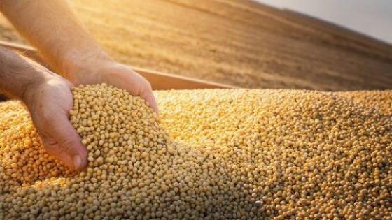 A la espera del reporte del USDA y la incertidumbre en la región previo a la cosecha, los precios están firmes para la soja — Agricultura — Dinámica Rural | El Espectador 810