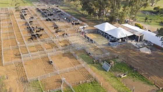 En Parada Fariña, Esc. O. Fernández remata más de 1.300 ovinos — Mercados — Dinámica Rural   El Espectador 810
