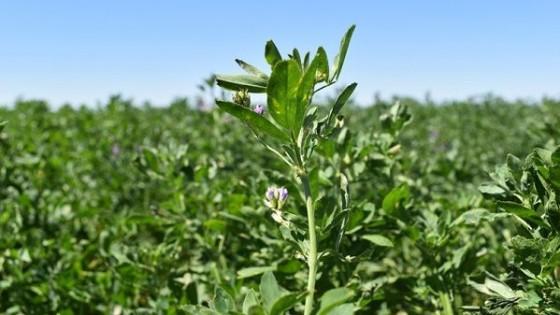 La demanda por semillas forrajeras superó expectativas de Prolesa — Lechería — Dinámica Rural | El Espectador 810