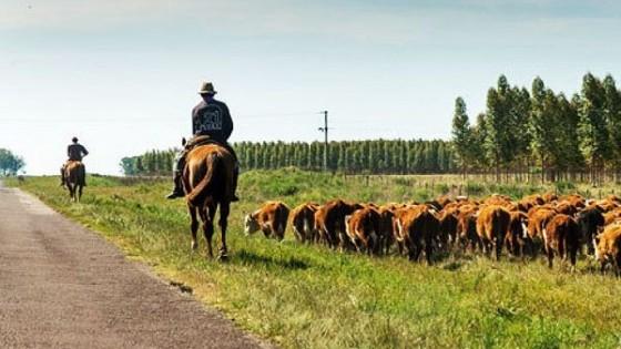 J. Vera: ''La falta de lluvias condiciona el mercado'' — Mercados — Dinámica Rural   El Espectador 810