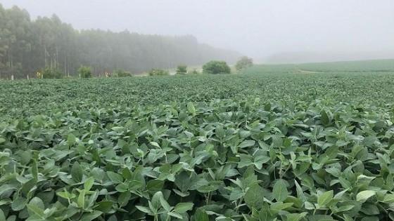 G. Carballal: ''En soja tendremos un año magro en rendimientos'' — Agricultura — Dinámica Rural | El Espectador 810