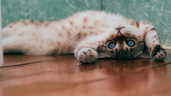 Secretos gatunos — Perros y gatos: curiosidades que no muerden — Bien Igual   El Espectador 810