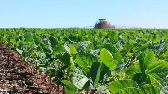 E. Erize: Si EEUU tiene que comprar soja a Argentina ''quiero una platea preferencial'' — Economía — Dinámica Rural | El Espectador 810