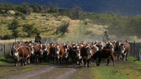 Plazarural colocó el 95% de la oferta — Mercados — Dinámica Rural   El Espectador 810
