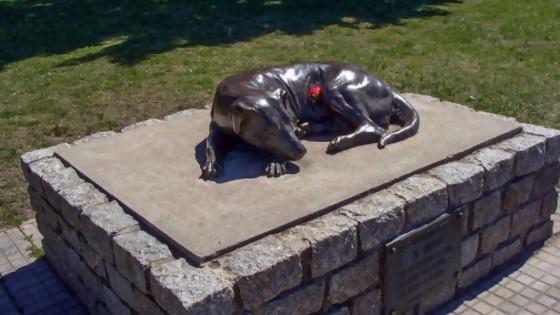 El Gaucho: la estatua que recuerda a un perro de nadie, pero de todos los duraznenses — ¡Qué animal! — Abran Cancha | El Espectador 810