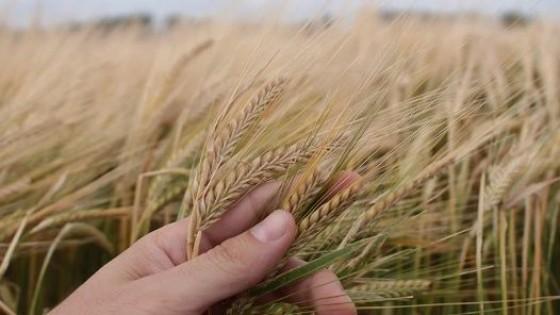 La cebada se perfila ''muy bien para la zafra que viene'' — Agricultura — Dinámica Rural | El Espectador 810