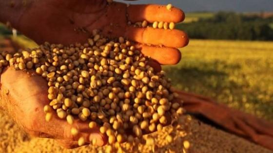 Argentina en soja alcanzaría los 45 millones de toneladas — Agricultura — Dinámica Rural | El Espectador 810
