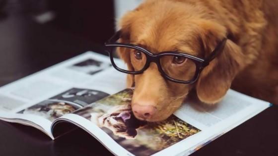 Mitos caninos — Perros y gatos: curiosidades que no muerden — Bien Igual   El Espectador 810