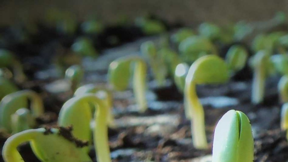 Soja: se sembró casi el 100% de la de primera, ahora  —  Agricultura — Dinámica Rural | El Espectador 810