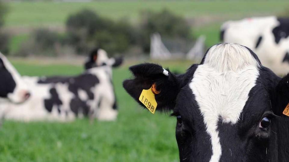 La remisión de leche a plantas industriales sufrió un descenso del 6%, dado la falta de lluvias e iliquidez del productor — Audios — Dinámica Rural | El Espectador 810