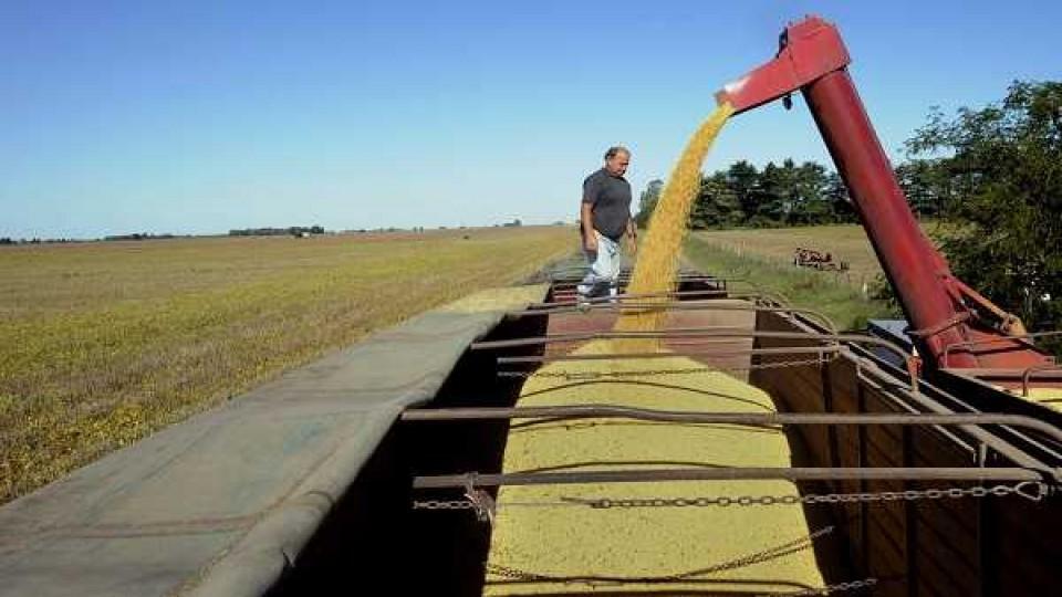 Con un 90% del área cosechada, solo resta trillar la soja sembrada desde Enero —  Agricultura — Dinámica Rural | El Espectador 810