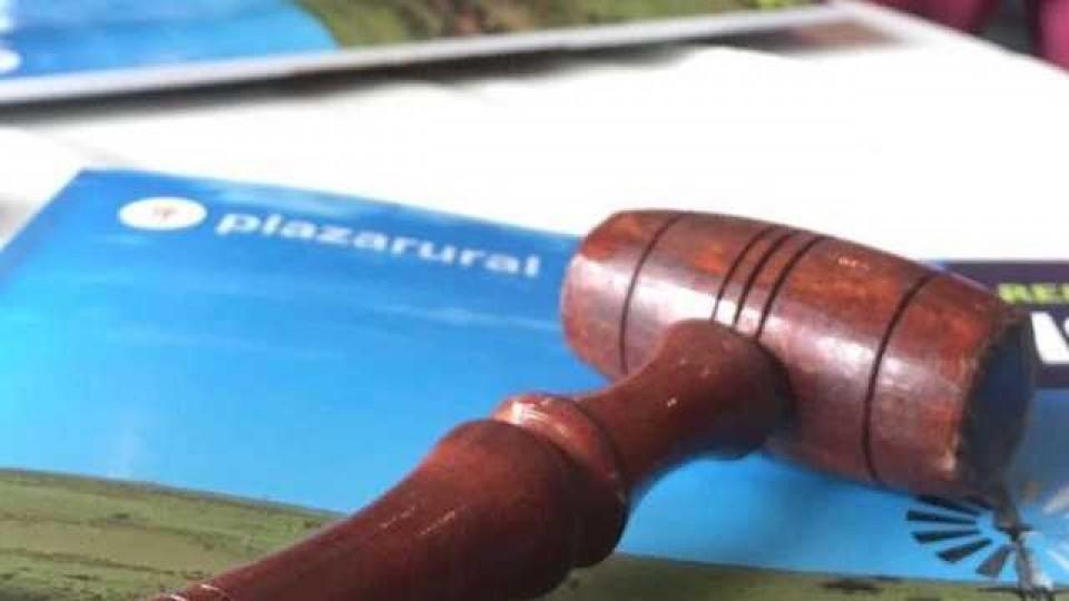La demanda compró el 100% de la oferta de Plazarural  —  Ganadería — Dinámica Rural | El Espectador 810