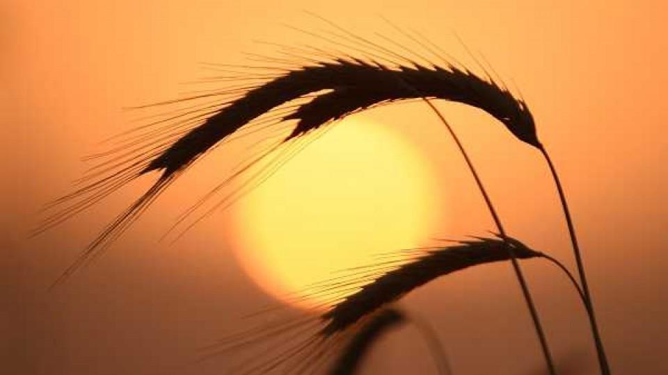 Agricultura preventiva: Proquimur puso en el mercado el producto 'Único', un fungicida que ataca los principales problemas sanitarios de los cultivos de invierno —  Agricultura — Dinámica Rural | El Espectador 810