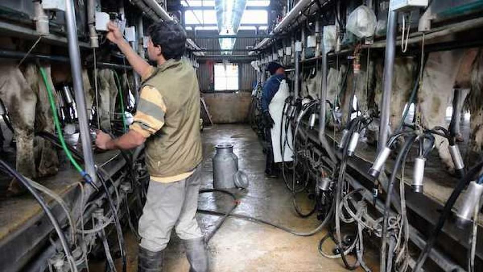 Proleco impulsa una línea de créditos para socios de Conaprole, con hasta dos meses de gracia y un máximo de 15 mil dólares —  Lechería — Dinámica Rural | El Espectador 810