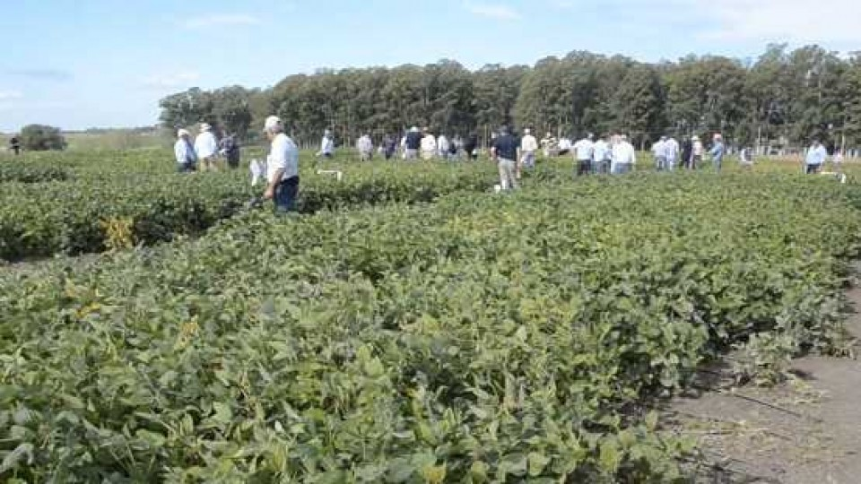 La falta de lluvias incide en la etapa reproductiva de la soja —  Agricultura — Dinámica Rural | El Espectador 810