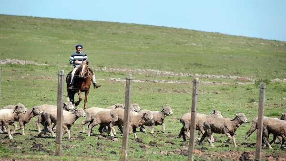 La seguridad rural está bajo la lupa de los asesores jurídicos de las principales gremiales de productores — Audios — Dinámica Rural | El Espectador 810
