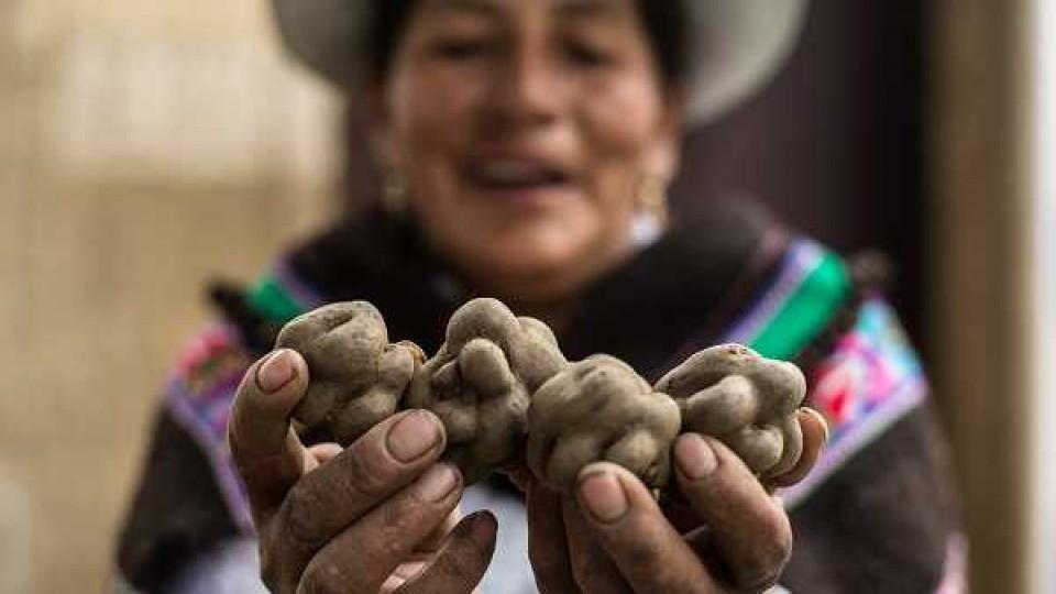 Perú, un país con una gran riqueza agrícola — Audios — Dinámica Rural | El Espectador 810