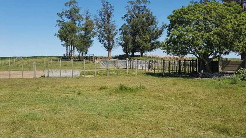 Inmuebles rurales: 'hay oferta, pero la demanda es muy cautelosa' —  Economía — Dinámica Rural | El Espectador 810